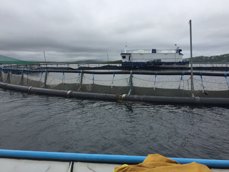 Aquaculture fish farm site